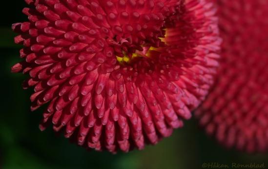 blom 28april 001ps