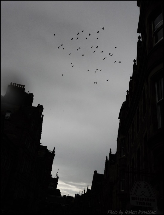 scotbirds